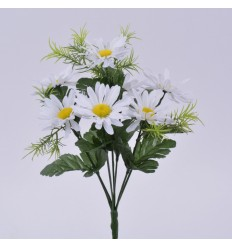 MINI MARGUERITE/SPRINGERIS X 7