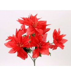 POINSETTIA X7 RED