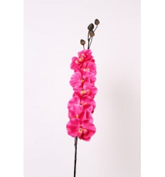 ORCHIDEE GM PURPLE RED