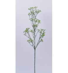 GYPSOPHILLE GREEN