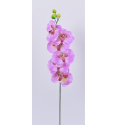 ORCHIDEE PM X 7 LAVENDER