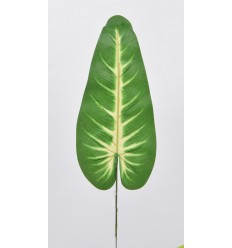 FEUILLE ANTHURIUM