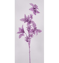 POINCETIA TIGE PURPLE