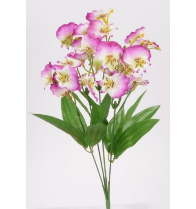 PIQUET ONCIDIUM X5 ASS