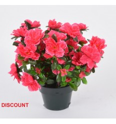 POT DISCOUNT 12 CM AZALEE X6 ASSORTI